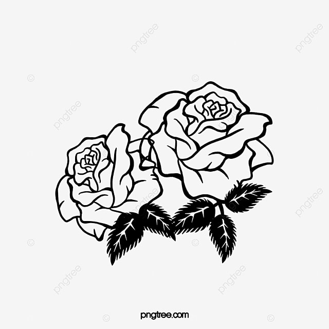 Two Black And White Roses Angle Trim Black And White Simple Rose