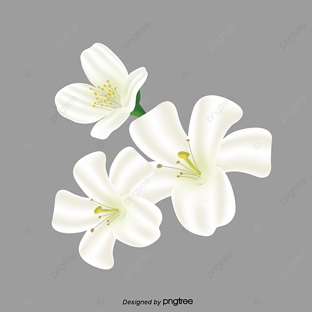 White Flower Png Images Vectors And Psd Files Free Download On