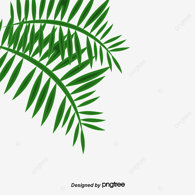 Palm Leaf Leaf Trees Green Png Image For Free Download