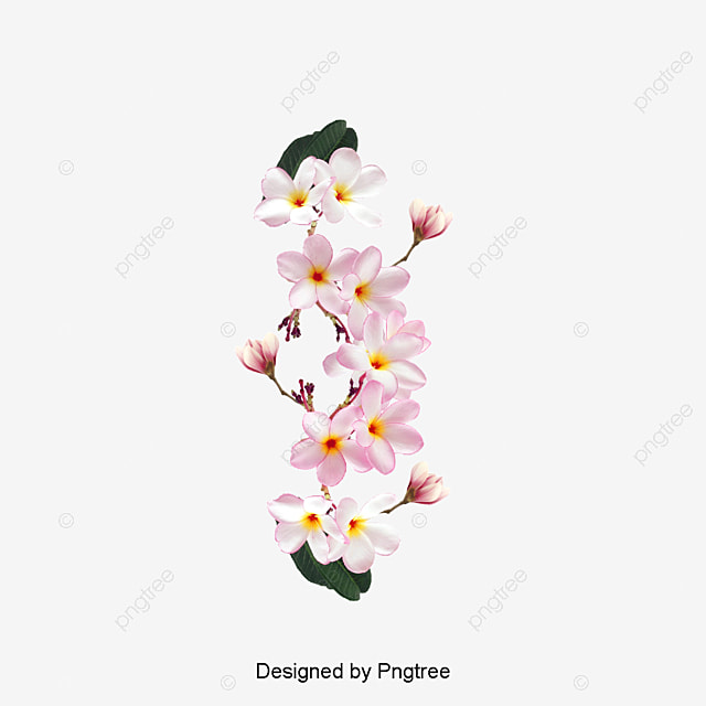 Vector a pink magnolia flowers magnolia pink one png and vector vector a pink magnolia flowers magnolia pink one png and vector mightylinksfo