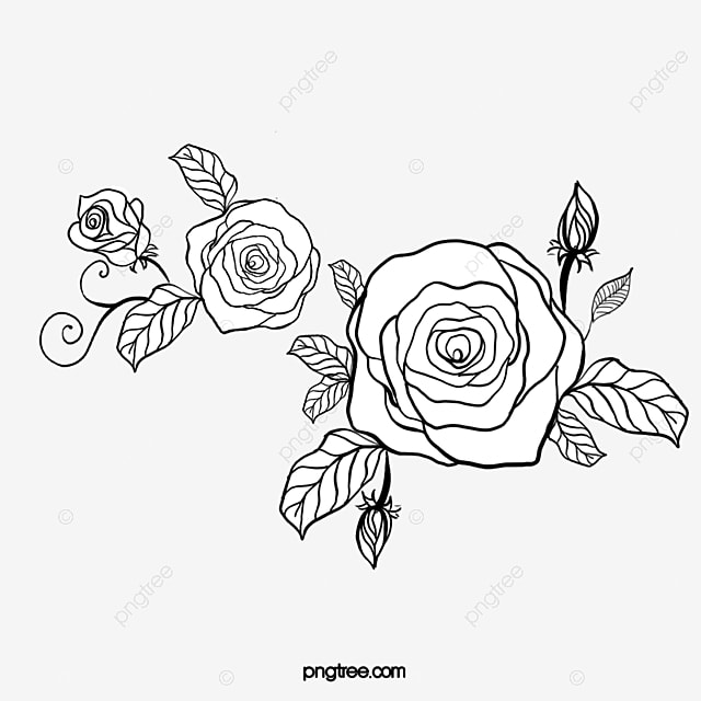 Rose Rose Clipart Black And White Transparent Image And
