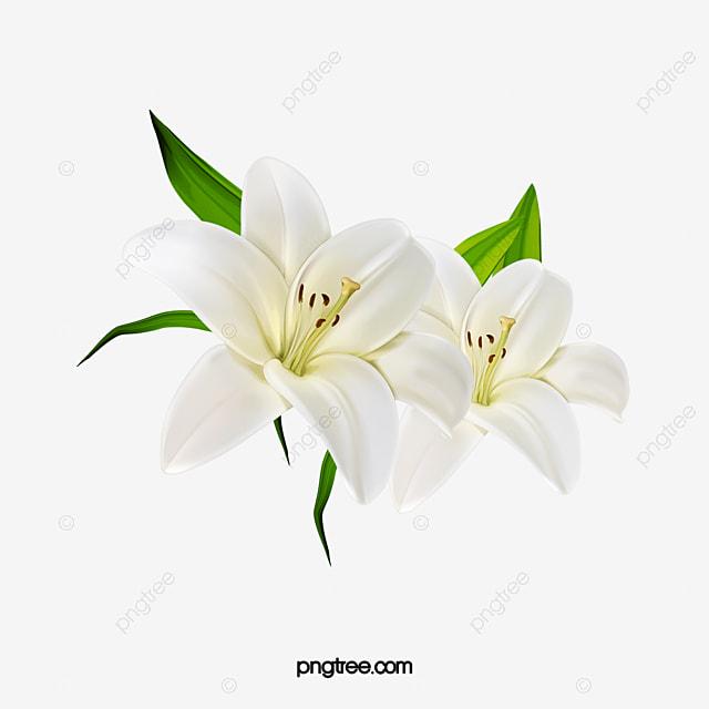 Flores Flores Blancas Decoracion De Flores Elementos De