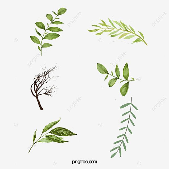As Folhas Folha Verde Folhas De Desenhos Animados Aquarela De
