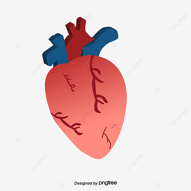 Human Heart PNG Images | Vectors and PSD Files | Free Download on ...