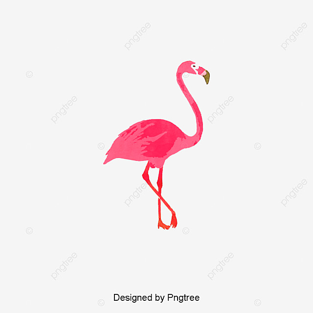 Single Flamingo Bird Flamingos Red Png And Vector For