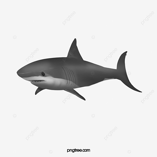 requin les requins figure poisson le requin tigre image