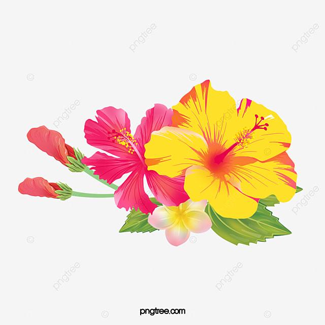 Fleurs d hibiscus peint la main esth tique hibiscus - Dessin d hibiscus ...