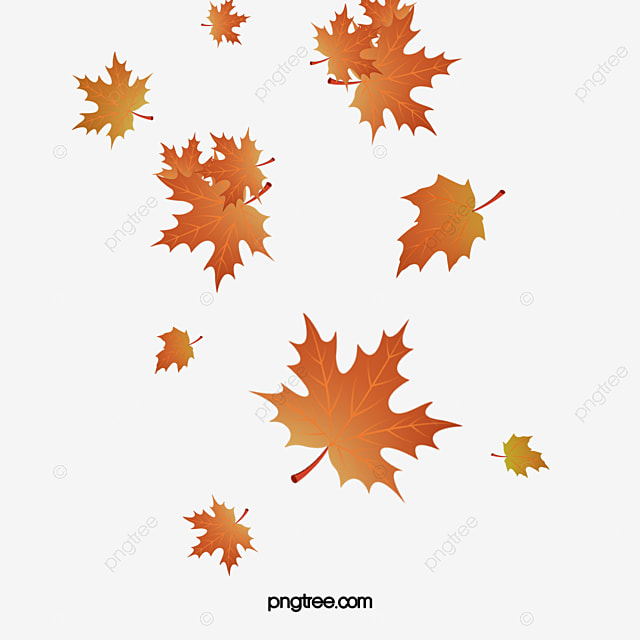 fall leaves png images vectors and psd files free download on