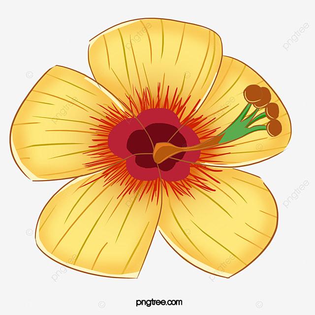 Gambar Kembang Sepatu Kuning Althea Kuning Kartun Png Transparan Clipart Dan File Psd Untuk Unduh Gratis