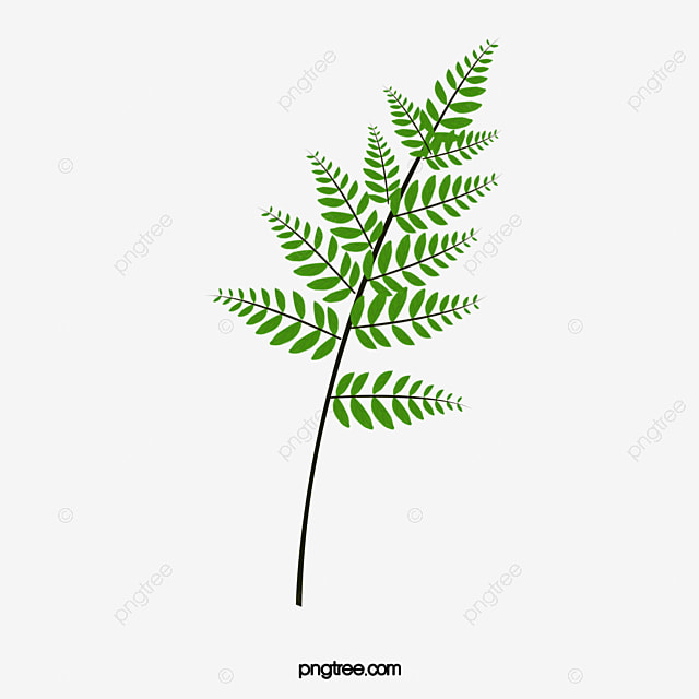 Fern Png Vector PSD And Clipart With Transparent