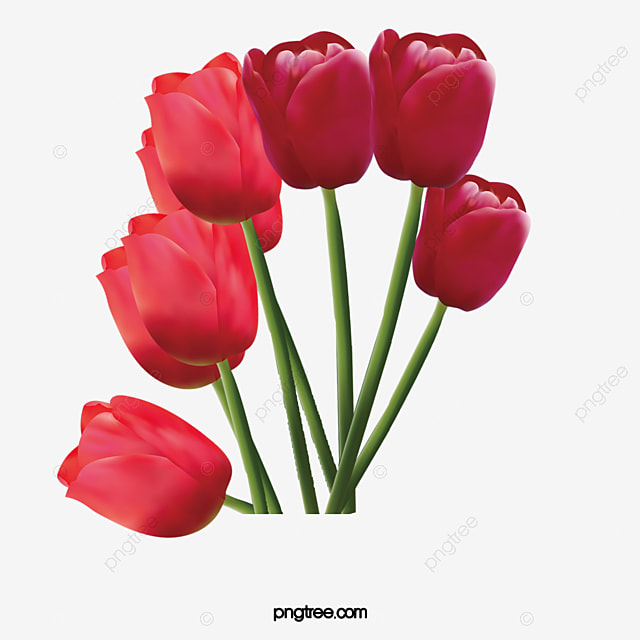Red Tulips, Tulip, Red Flower, Bouquet PNG Image and Clipart for ...