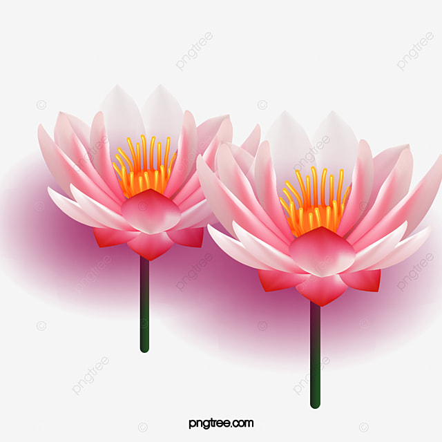 Lotus flowers lotus pink flowers png and psd file for free download lotus flowers lotus pink flowers png and psd mightylinksfo