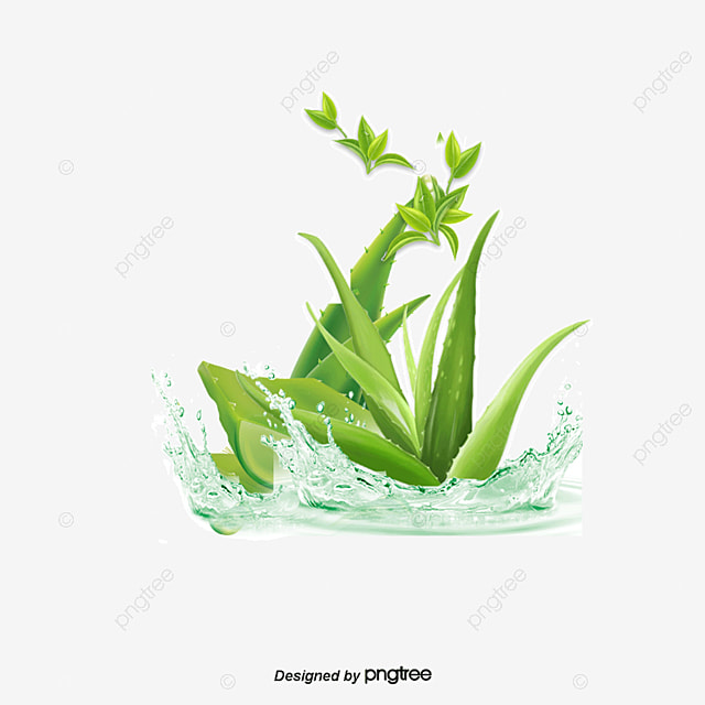 vector aloe vera aloe vera aloe essential oils png and vector for free download. Black Bedroom Furniture Sets. Home Design Ideas