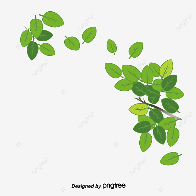 Vector leaves decoration, Leaves, Green Leaves, Decoration PNG and Vector