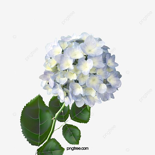 a wooden white hydrangea  flowers  shrubs  patio flowers