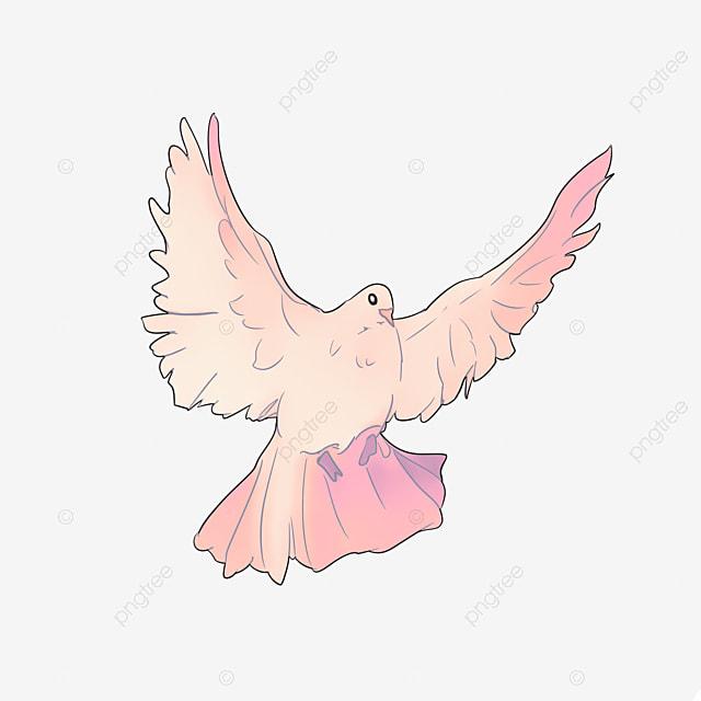 Volando Las Palomas Plumas Blancas Volar Aves Imagen Png Para