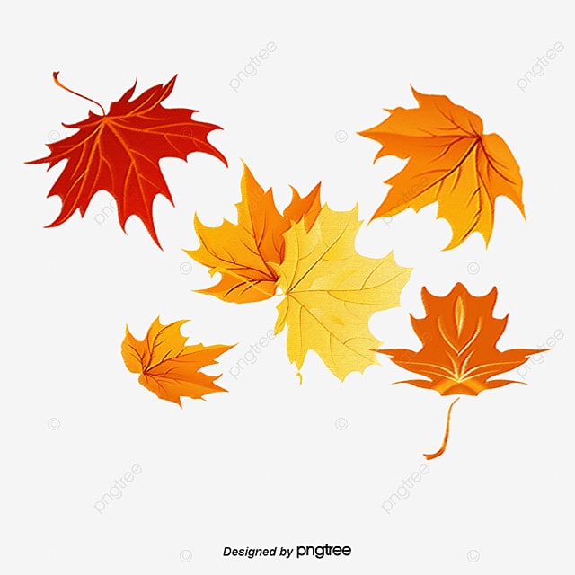 Maple Leaf Fall And Winter Elements, Winter Clipart ...