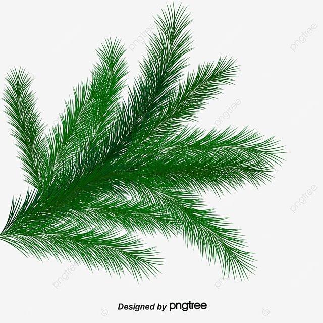 christmas greenery christmas decorative elements creative christmas png image and clipart - Christmas Greenery