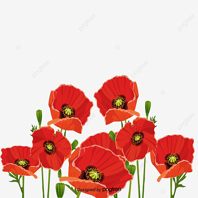 Poppy Png, Vector, PSD, and Clipart With Transparent ...