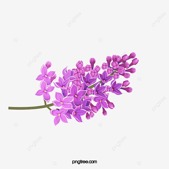 Lavanda Flores Lavanda Purple Imagen Png Para Descarga Gratuita
