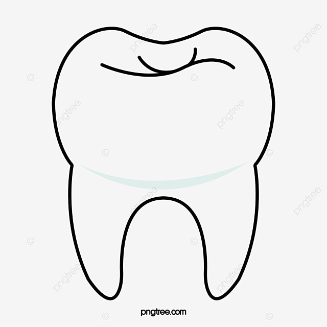le dessin des dents le dessin des dents une dent les dents
