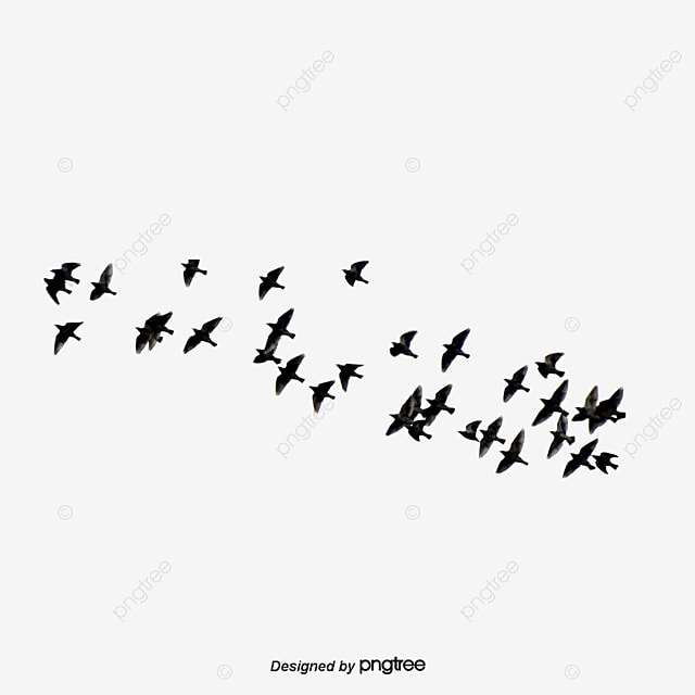 flying bird  fly  birds  asuka png transparent clipart image and psd file for free download