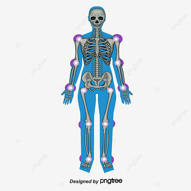 Esqueleto Humano, Esqueleto Humano, Joint, Hueso Archivo PNG y PSD ...