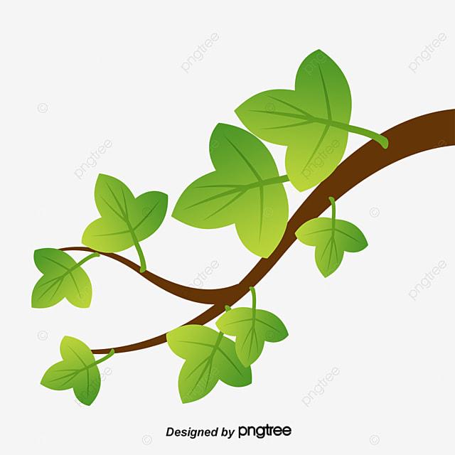 les feuilles de lierre des plantes vert des branches image png pour le t u00e9l u00e9chargement libre