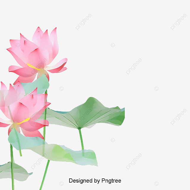 Lotus flower png images vectors and psd files free download on lotus flowers lotus clipart flowers lotus png image and clipart mightylinksfo