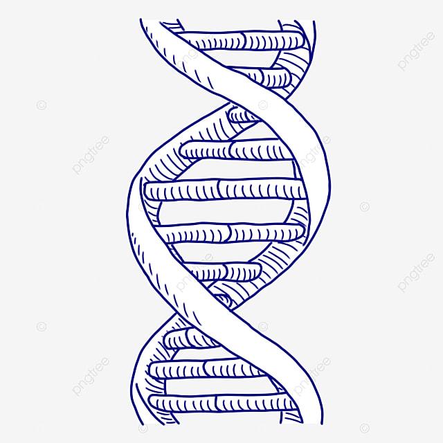 Fotos De Gen 233 Tica De Adn Humano Cuerpo Humano Adn Genetic