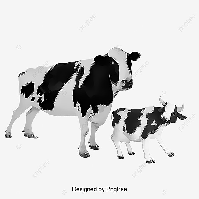 Cow Calf Image, Cow Clipart, Animal, Biological PNG