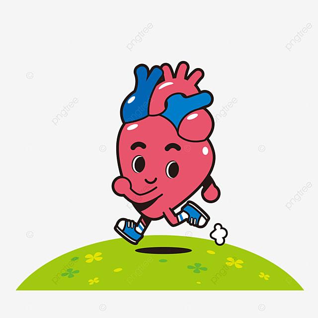 La Figura Muestra El Corazón Humano, Human Organ, Guayaba Corazon ...