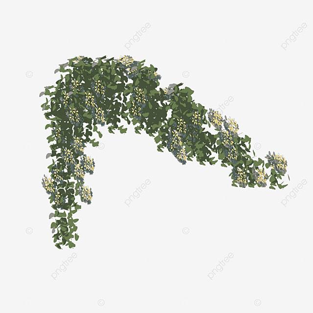vines vector vine flower vine plant png and psd file for free rh pngtree com vector vanes surgery vector vanes surgery