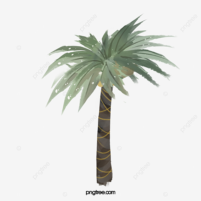 date palm trees plant trees plants png image and clipart for free