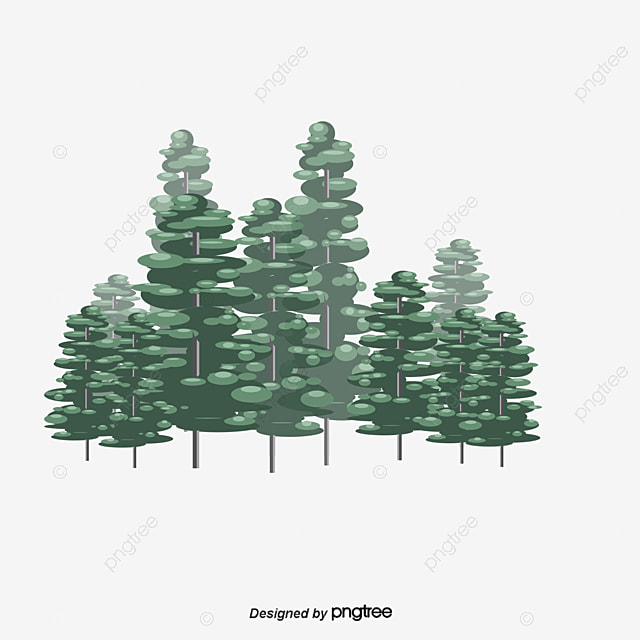evergreen tree evergreen les arbres bois fichier png et