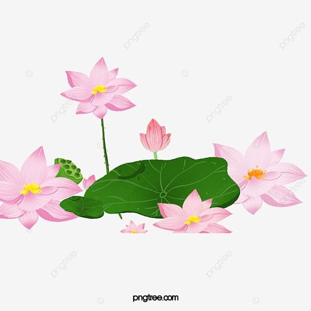 Brilliant Lotus Open Lotus Brilliant Lotus Hungry Pink Flowers