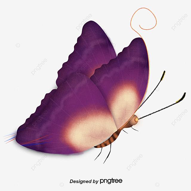 Una Bonita Mariposa Purple Golden Mariposa Imagen Png Para Descarga
