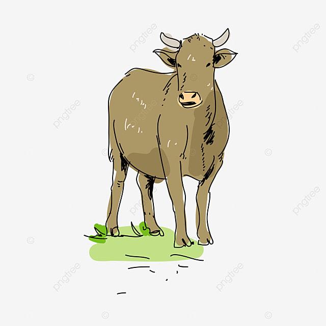 Cute Cartoon Cow Calf, Cute Clipart, Cartoon Clipart, Cow Clipart PNG Image  And