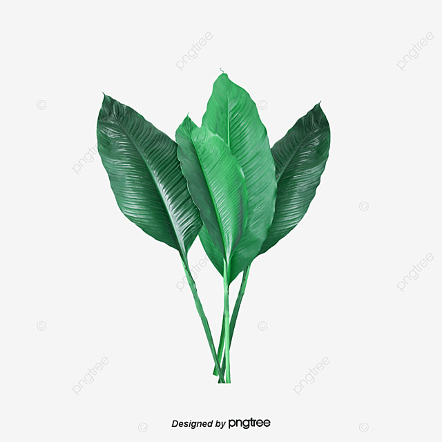 Tropical Leaves Tropical Leaves Green Png And Psd File