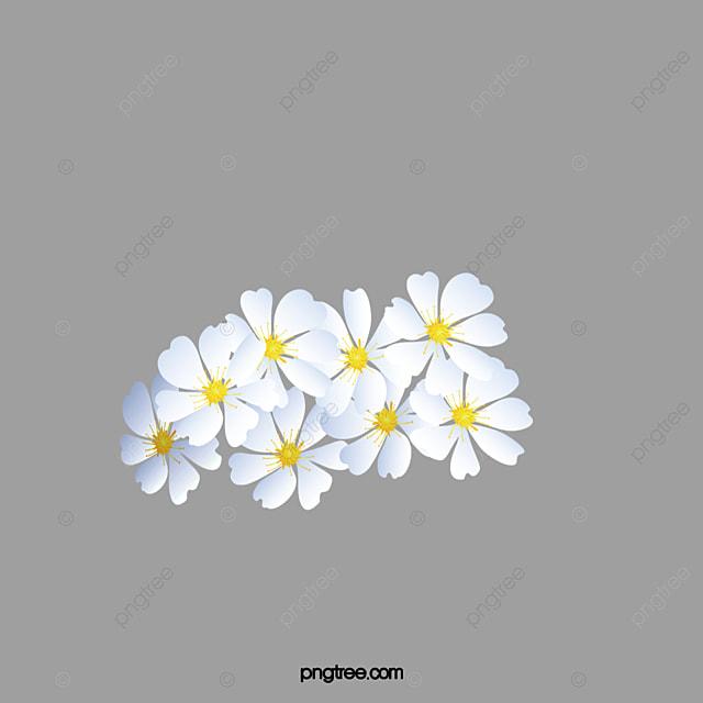 ياسمين هندي أبيض الزهور Png صورة للتحميل مجانا