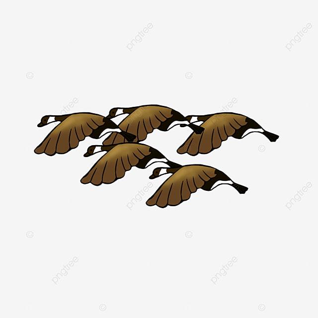 Z Lotu Ptaka Latać Ptak To Tylko Ptaki Obraz Png I Kliparty Do