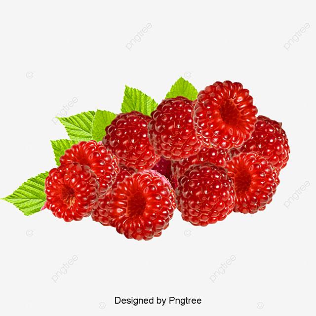 patr u00f3n de frambuesa hojas frambuesa rojo archivo png y psd