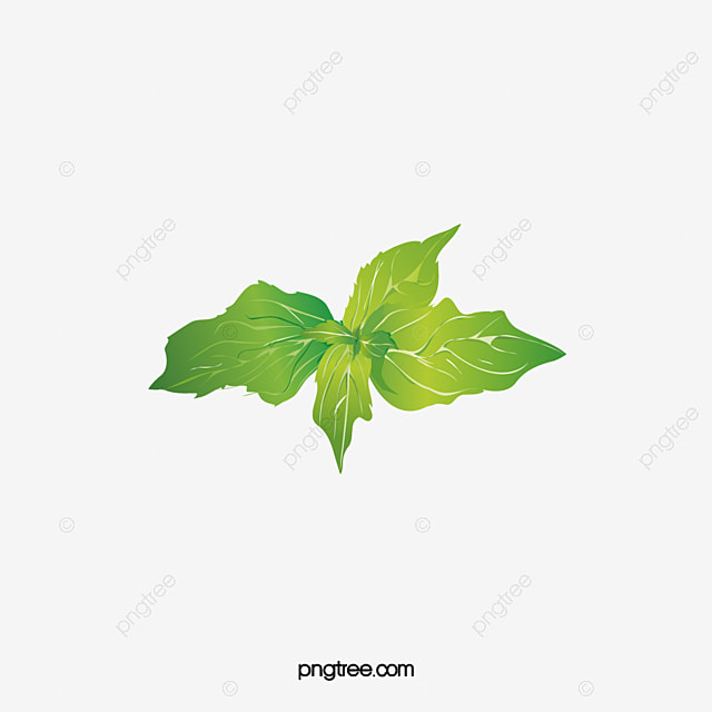 Mint Leaves Vector Leaf Green Leaves Png And Vector For