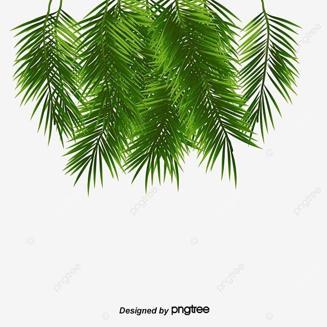 Folhas De Palmeiras As Folhas Plantas Verde PNG Imagem