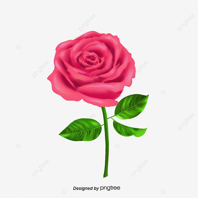 Rosas Rosadas Rosas Rosadas Flores Png Descargar Gratis Flores