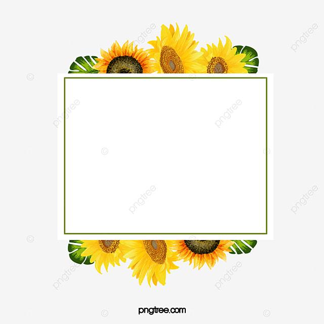 Sunflower Border, Sunflower Decorative Material, Sunflower ...