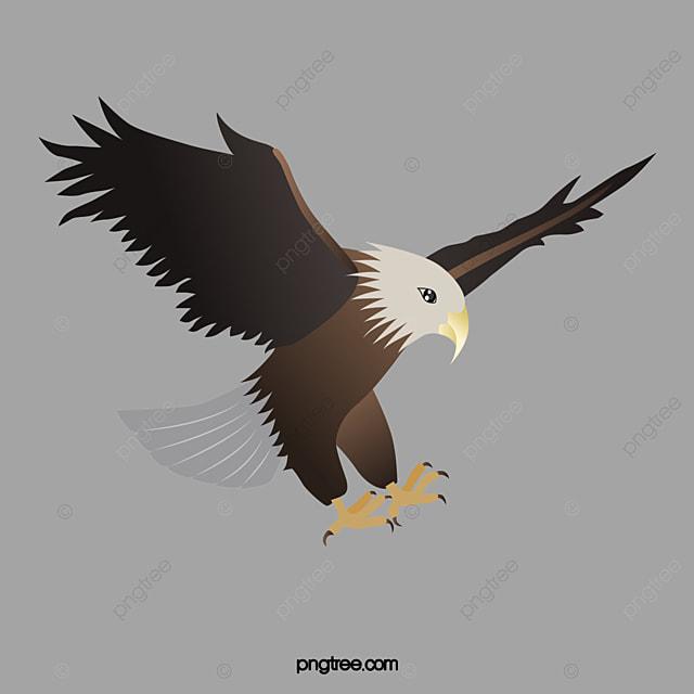 Flying eagles eagle fly animal png image for free download flying eagles eagle fly animal free png image altavistaventures Images