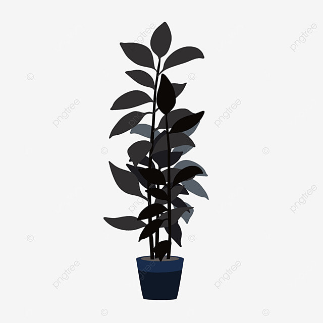 Rubber Tree Plant Tree Clipart Plant Clipart Potted Png Image And