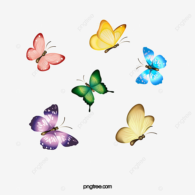butterfly transparent background background clipart