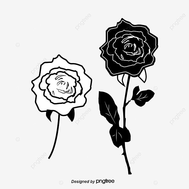 Rosas En Blanco Y Negro Blanco Y Negro Rose Línea Png Y Vector Para